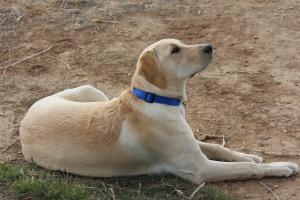 Dog Royalty