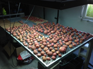Red Potatoes 2014