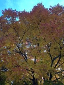 Ash tree 2014