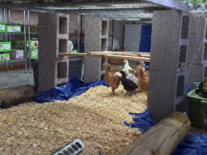 Indoor coop 4 2 2015