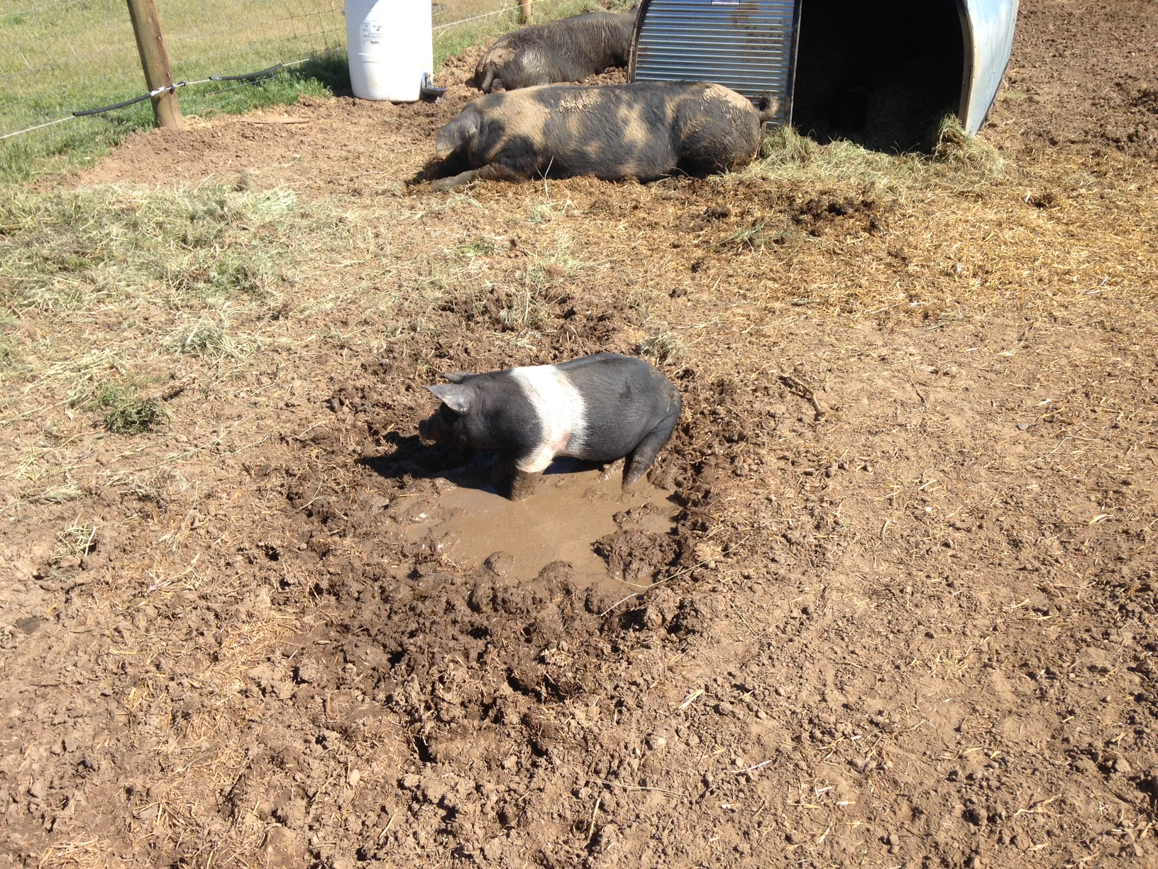Baby sized wallow