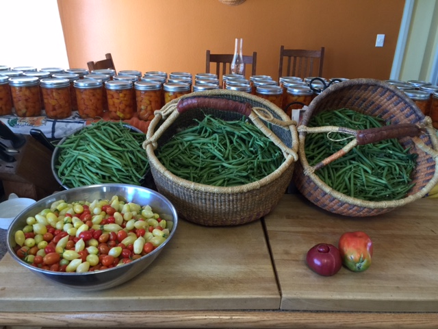 green-beans-2016